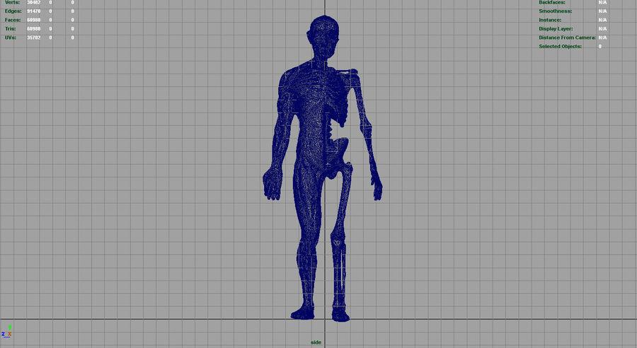 인간 신체 해부학 모델 royalty-free 3d model - Preview no. 15