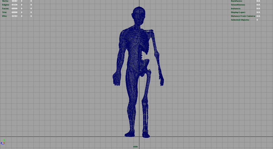 HUMAN BODY ANATOMY MODEL royalty-free 3d model - Preview no. 15