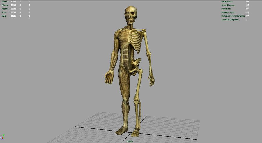 HUMAN BODY ANATOMY MODEL royalty-free 3d model - Preview no. 9