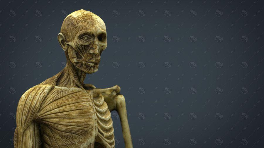 HUMAN BODY ANATOMY MODEL royalty-free 3d model - Preview no. 3