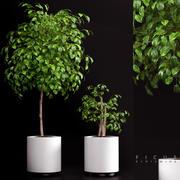 plants 70 3d model