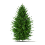 挪威云杉(Picea abies)2.4m 3d model