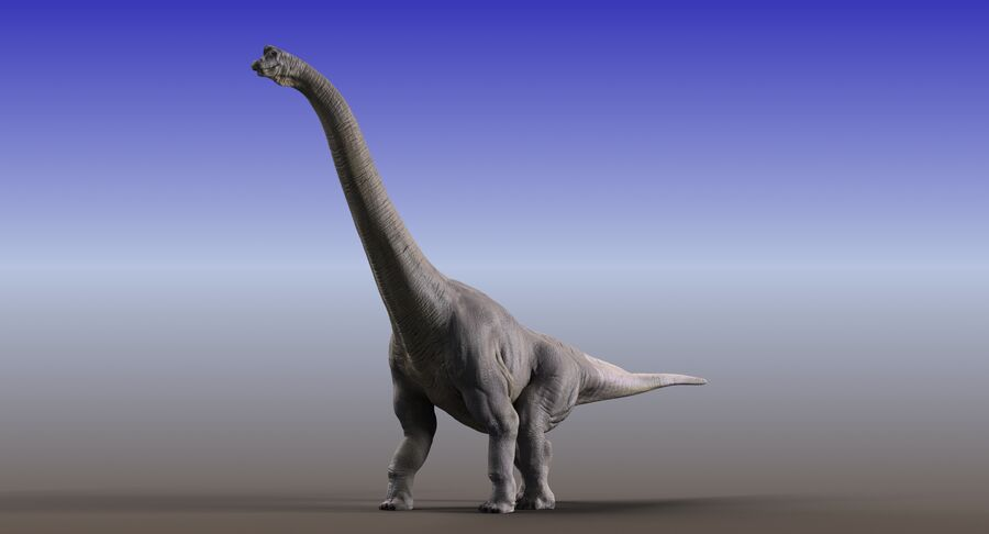 Brachiosaurus royalty-free 3d model - Preview no. 3