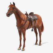 Cavallo marrone 3d model