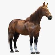 Pferd 3d model