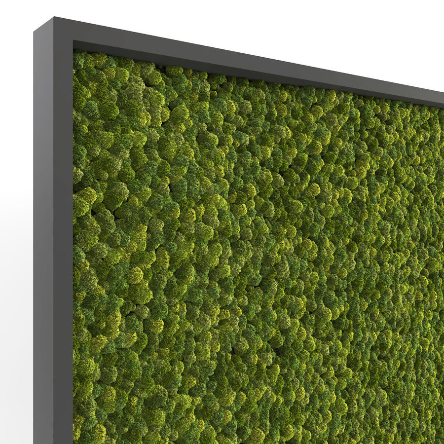 Moss Wall (Scatterable) royalty-free 3d model - Preview no. 7