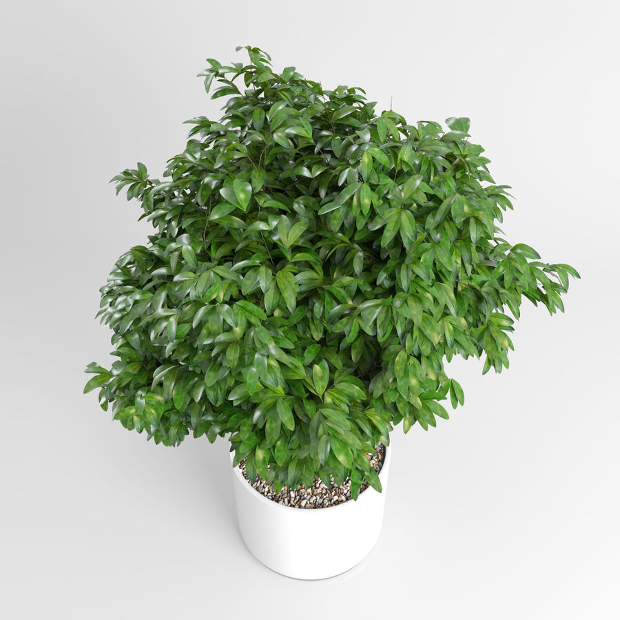 Plantas de casa (+ GrowFX) royalty-free 3d model - Preview no. 5