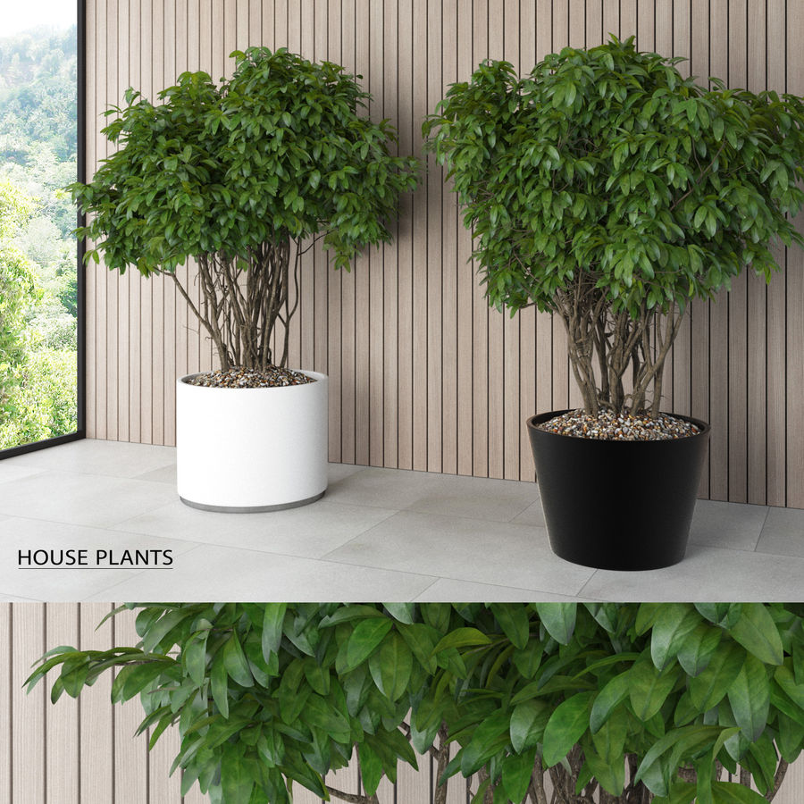 House Plants (+GrowFX) royalty-free 3d model - Preview no. 1