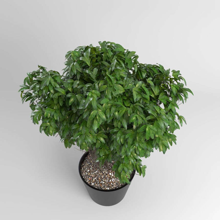 House Plants (+GrowFX) royalty-free 3d model - Preview no. 4