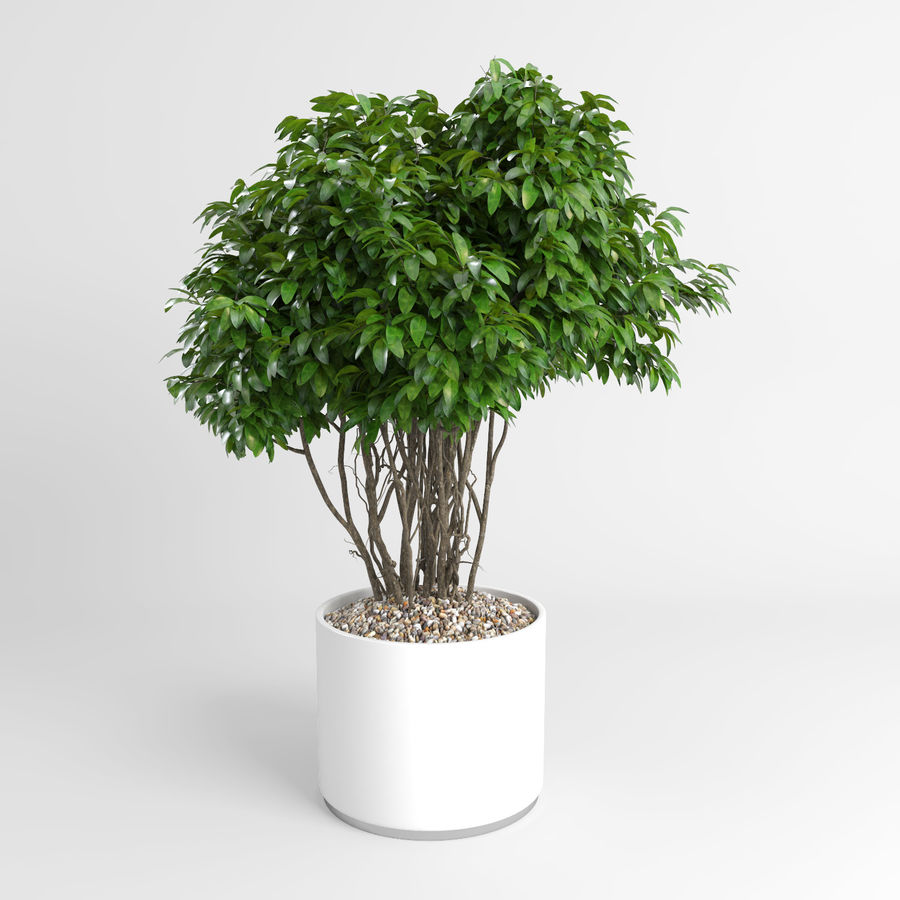 House Plants (+GrowFX) royalty-free 3d model - Preview no. 3