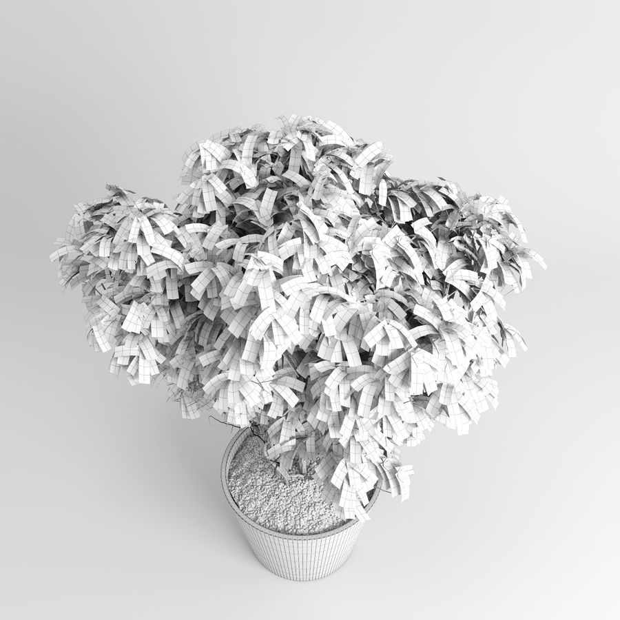 House Plants (+GrowFX) royalty-free 3d model - Preview no. 17