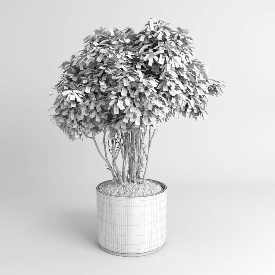 House Plants (+GrowFX) royalty-free 3d model - Preview no. 11