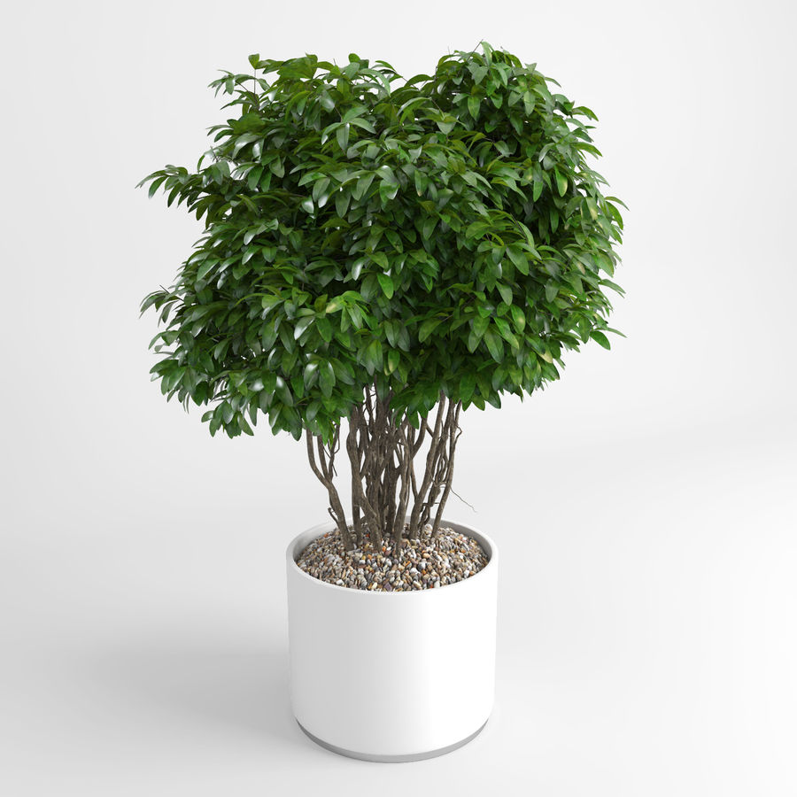House Plants (+GrowFX) royalty-free 3d model - Preview no. 2