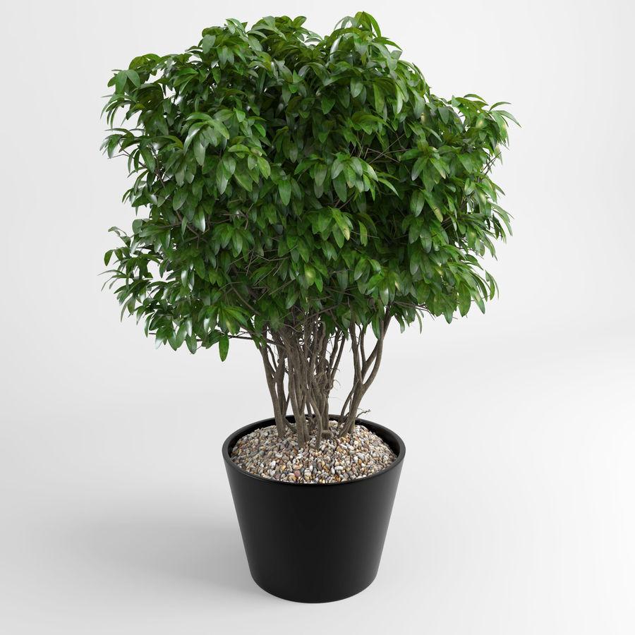 Plantas de casa (+ GrowFX) royalty-free 3d model - Preview no. 8
