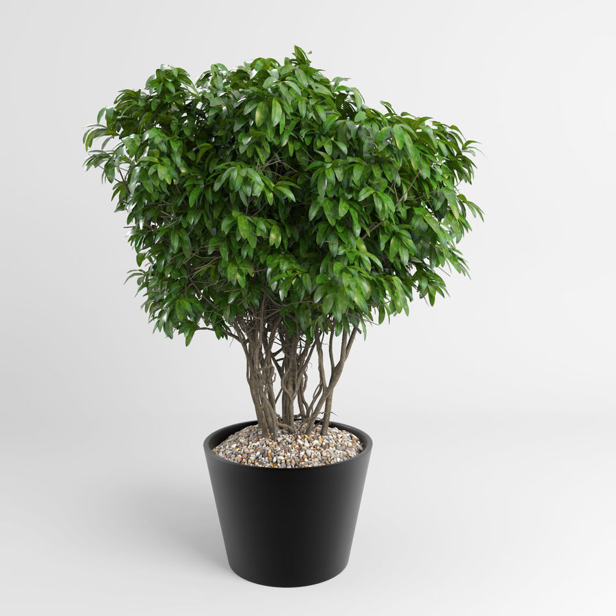 Plantas de casa (+ GrowFX) royalty-free 3d model - Preview no. 9
