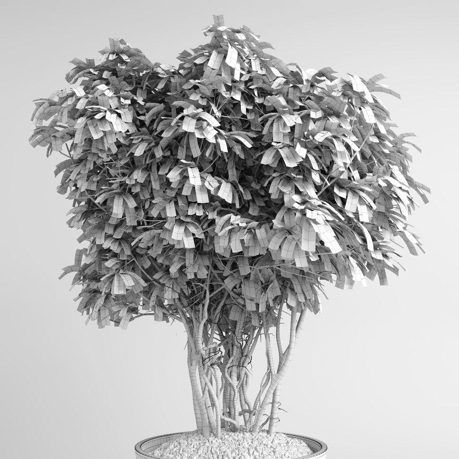 Plantas de casa (+ GrowFX) royalty-free 3d model - Preview no. 16