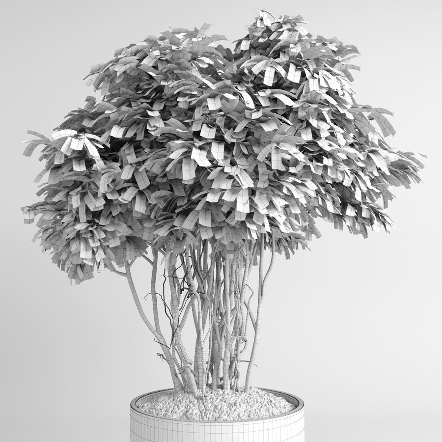 House Plants (+GrowFX) royalty-free 3d model - Preview no. 14