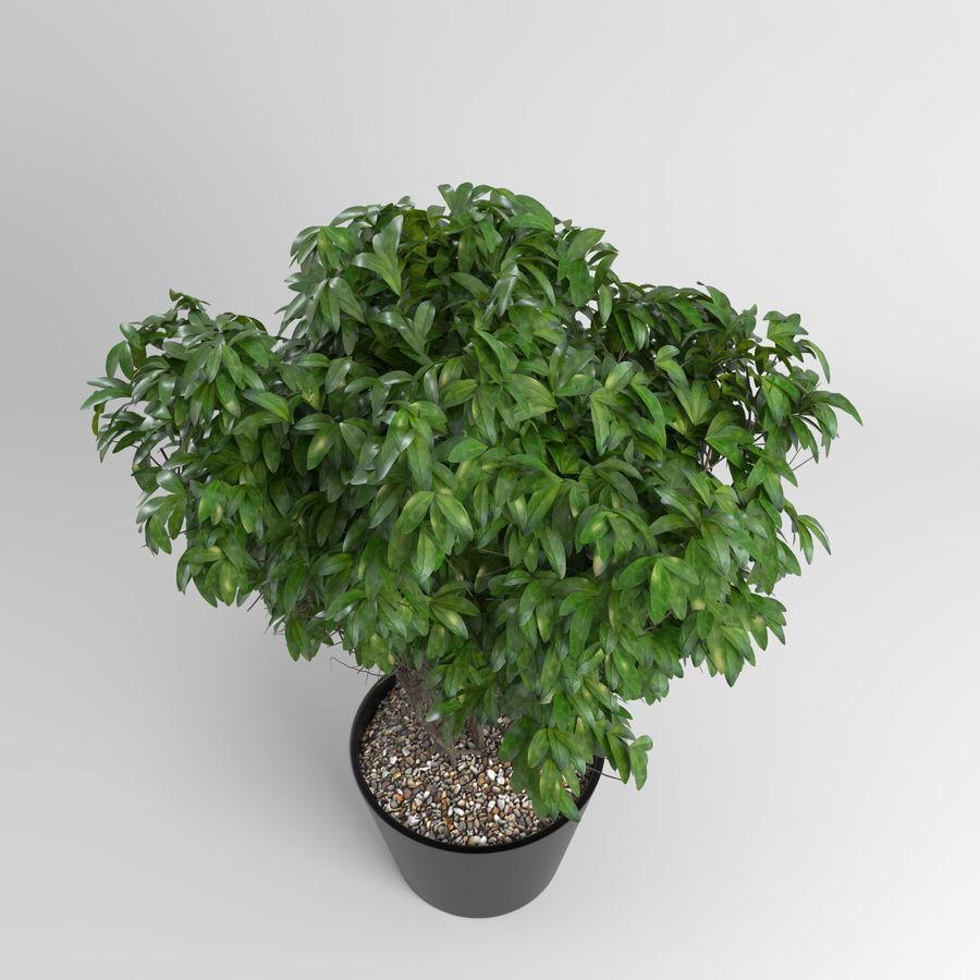 Plantas de casa (+ GrowFX) royalty-free 3d model - Preview no. 4