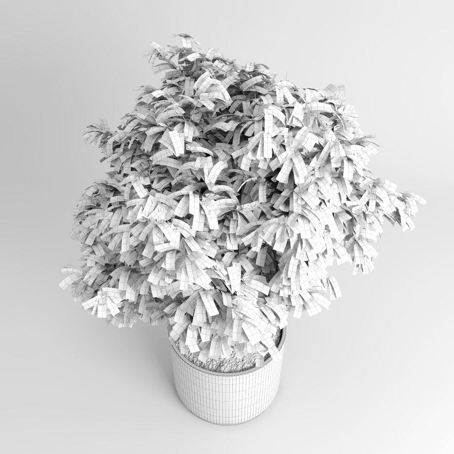 Plantas de casa (+ GrowFX) royalty-free 3d model - Preview no. 12