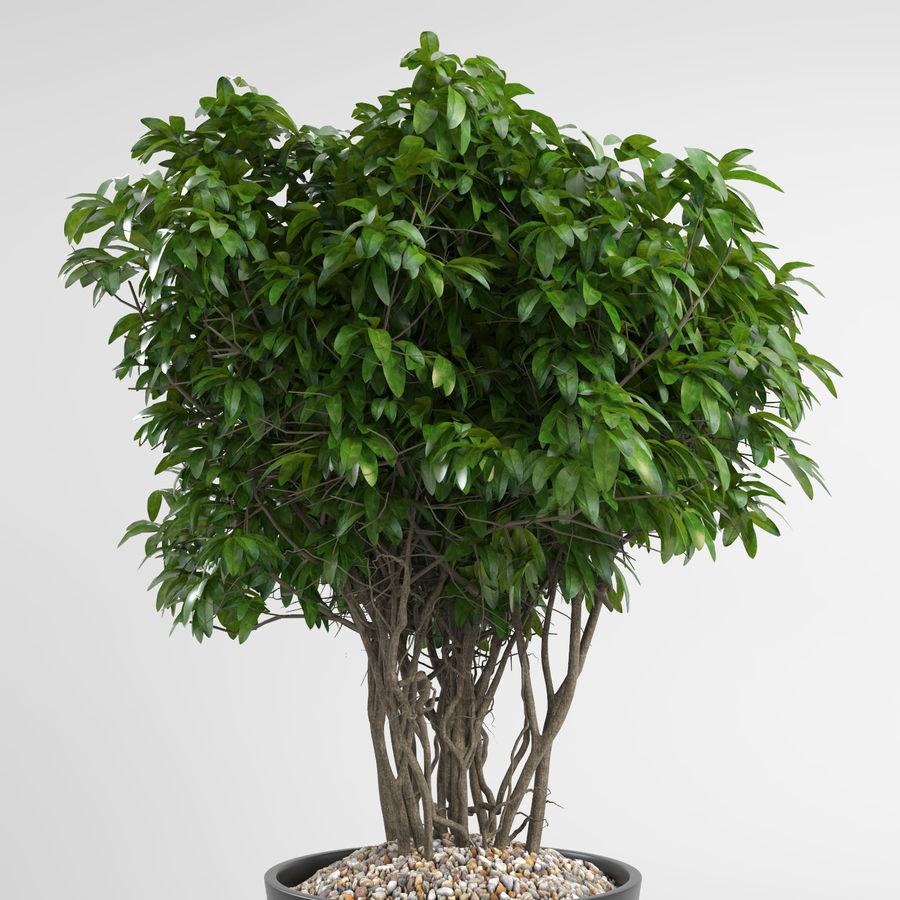 Plantas de casa (+ GrowFX) royalty-free 3d model - Preview no. 10