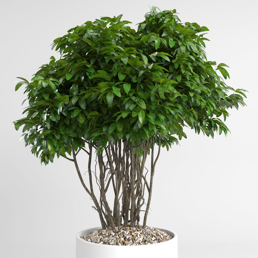 House Plants (+GrowFX) royalty-free 3d model - Preview no. 6