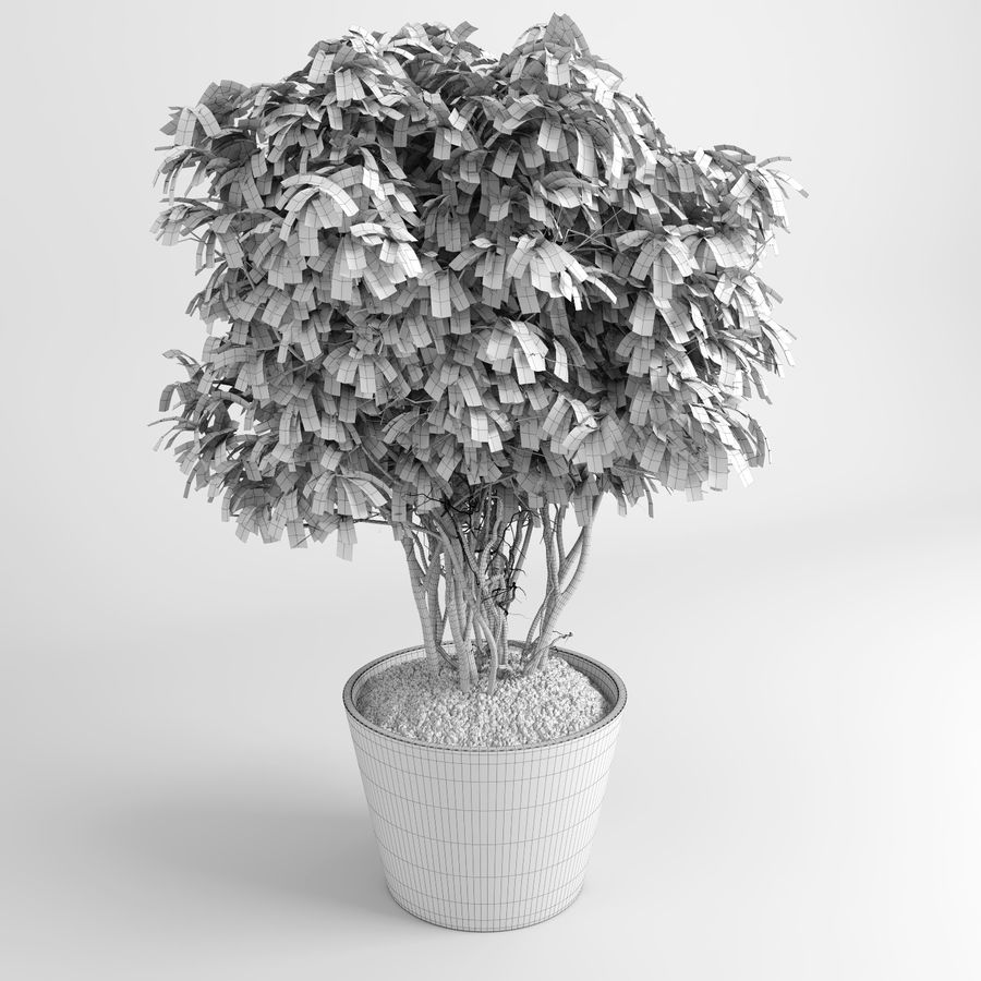 House Plants (+GrowFX) royalty-free 3d model - Preview no. 15