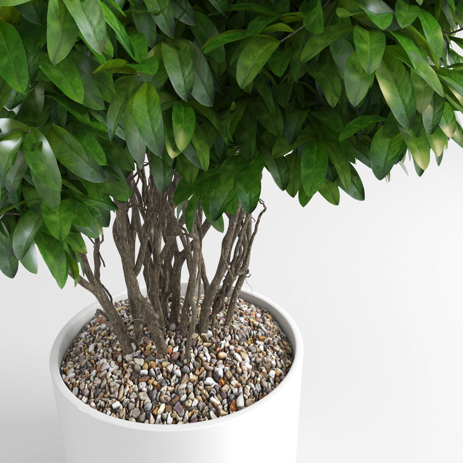 House Plants (+GrowFX) royalty-free 3d model - Preview no. 7