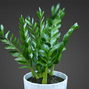 home plant barleria 3d model