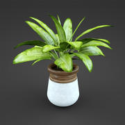 home plant Spathiph 3d model