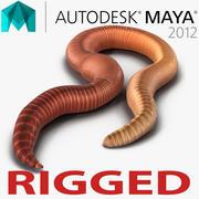 Земной червь, приспособленный для майя 3d model