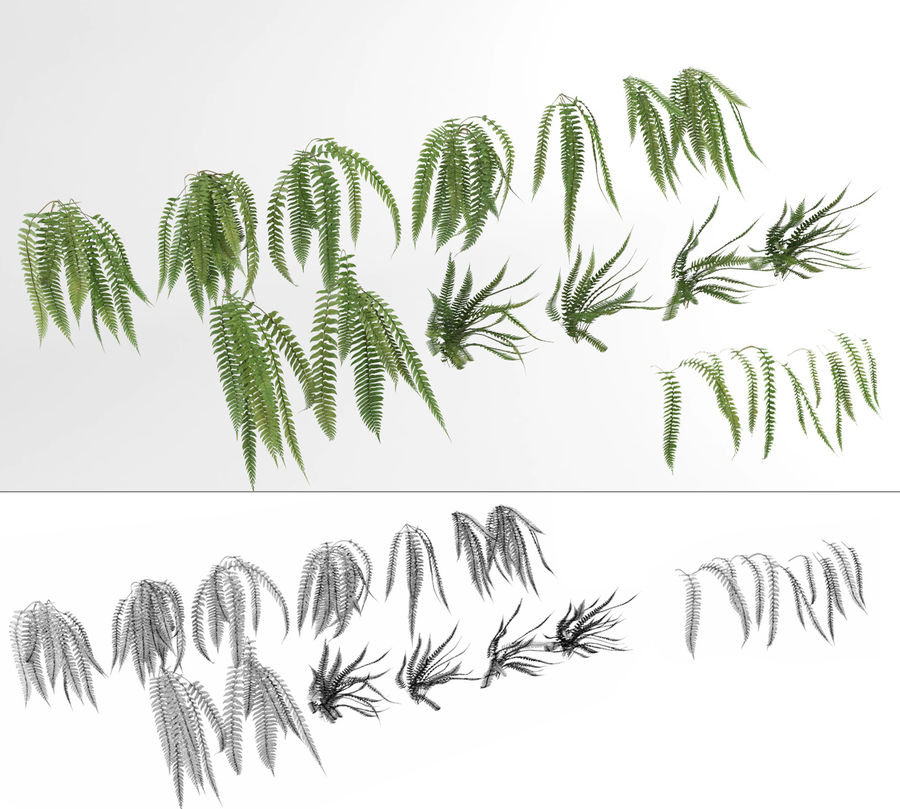 Scatterable Fern Wall (Leptosporangiate) royalty-free 3d model - Preview no. 7