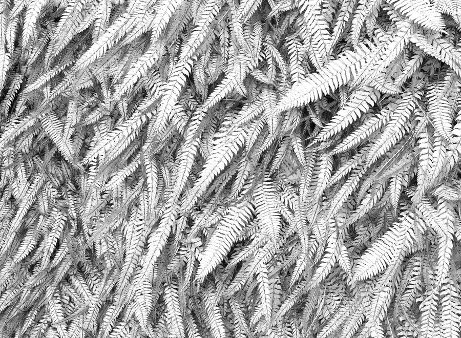 Scatterable Fern Wall (Leptosporangiate) royalty-free 3d model - Preview no. 10