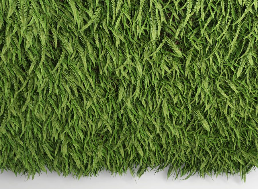 Scatterable Fern Wall (Leptosporangiate) royalty-free 3d model - Preview no. 3