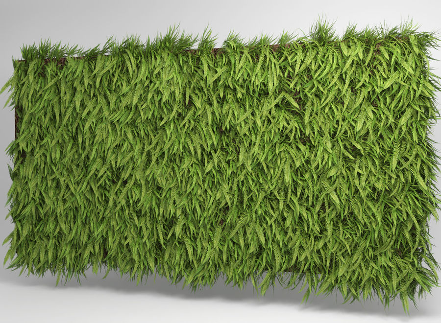 Scatterable Fern Wall (Leptosporangiate) royalty-free 3d model - Preview no. 5