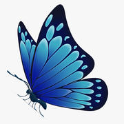 Butterfly Dark-blue 3d model