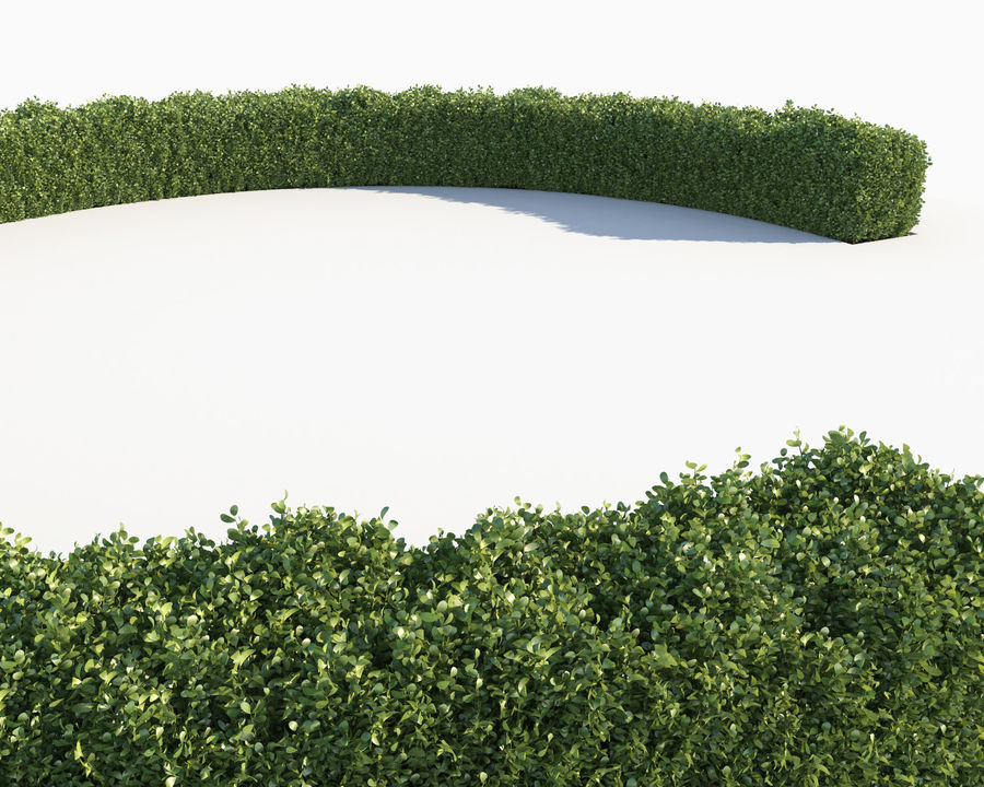 Scatterable Hedge royalty-free 3d model - Preview no. 10