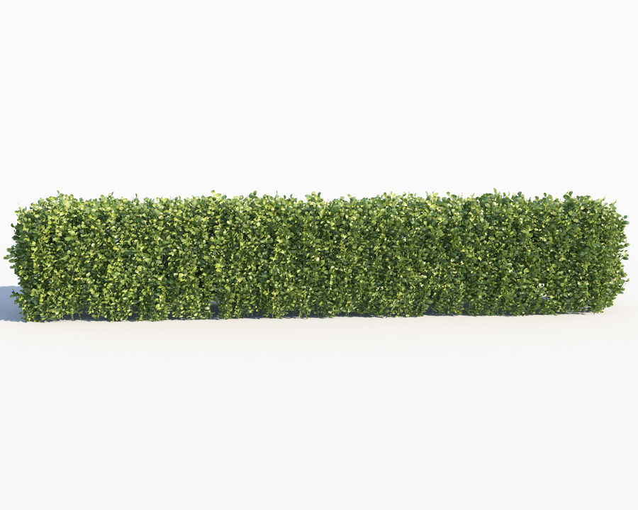 Scatterable Hedge royalty-free 3d model - Preview no. 4