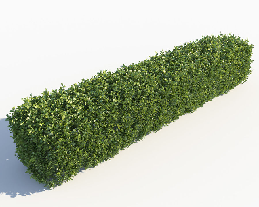 Scatterable Hedge royalty-free 3d model - Preview no. 2