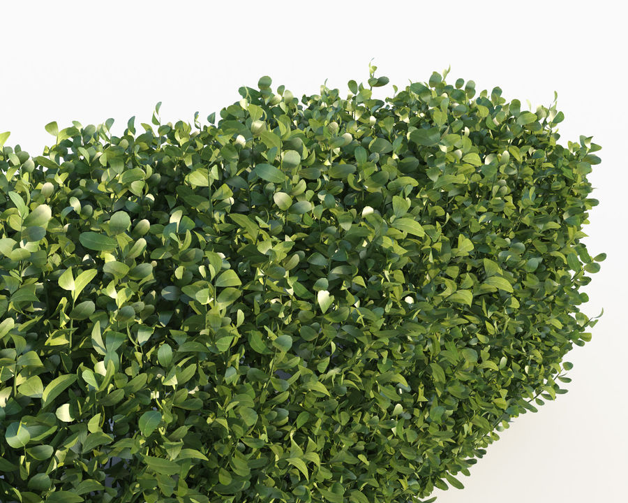 Scatterable Hedge royalty-free 3d model - Preview no. 6