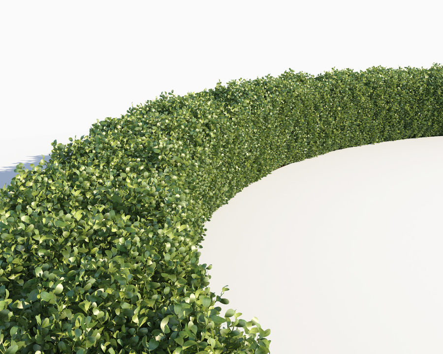 Scatterable Hedge royalty-free 3d model - Preview no. 9