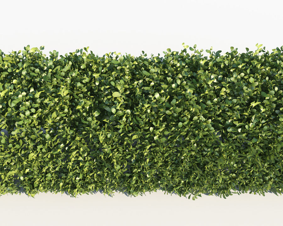 Scatterable Hedge royalty-free 3d model - Preview no. 5