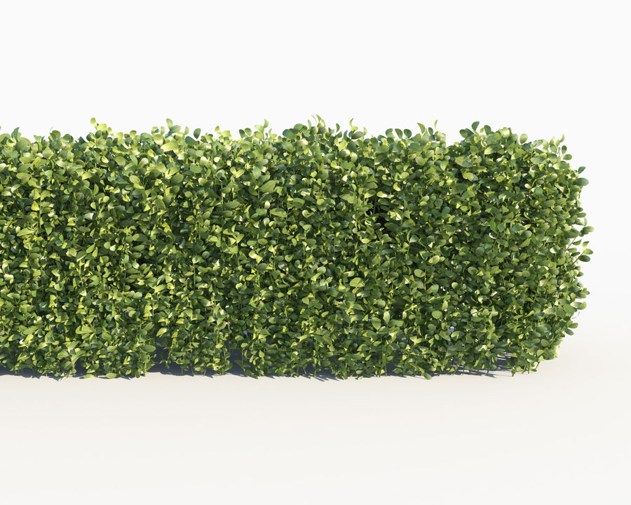 Scatterable Hedge royalty-free 3d model - Preview no. 3