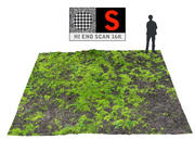 Forest ground 16K Ultra HD 3d model