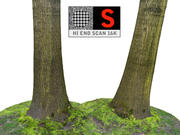 Bosque de árboles 16K modelo 3d