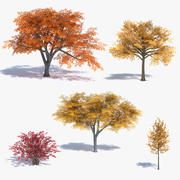 Low Poly Fall Trees Set 3d model