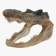 Tête d'aligator 3d model