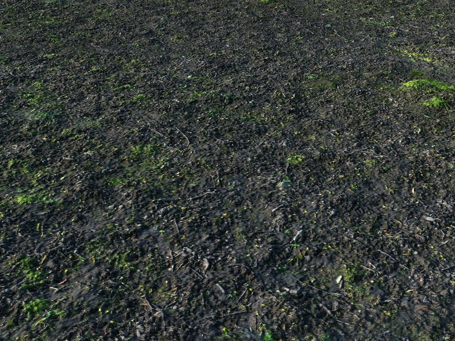 Forest ground 16K Ultra HD royalty-free 3d model - Preview no. 6