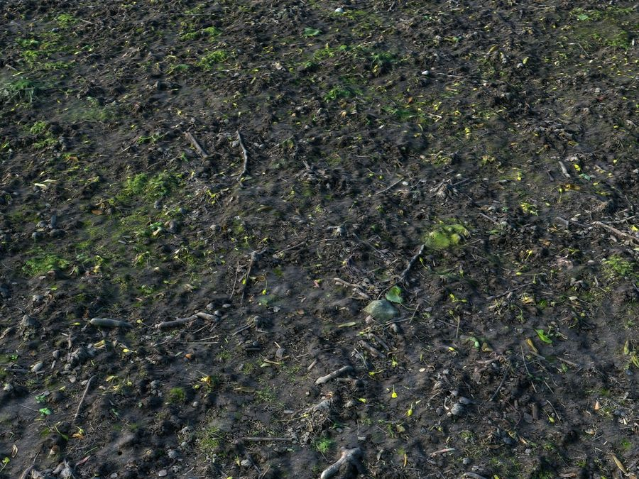 Forest ground 16K Ultra HD royalty-free 3d model - Preview no. 7