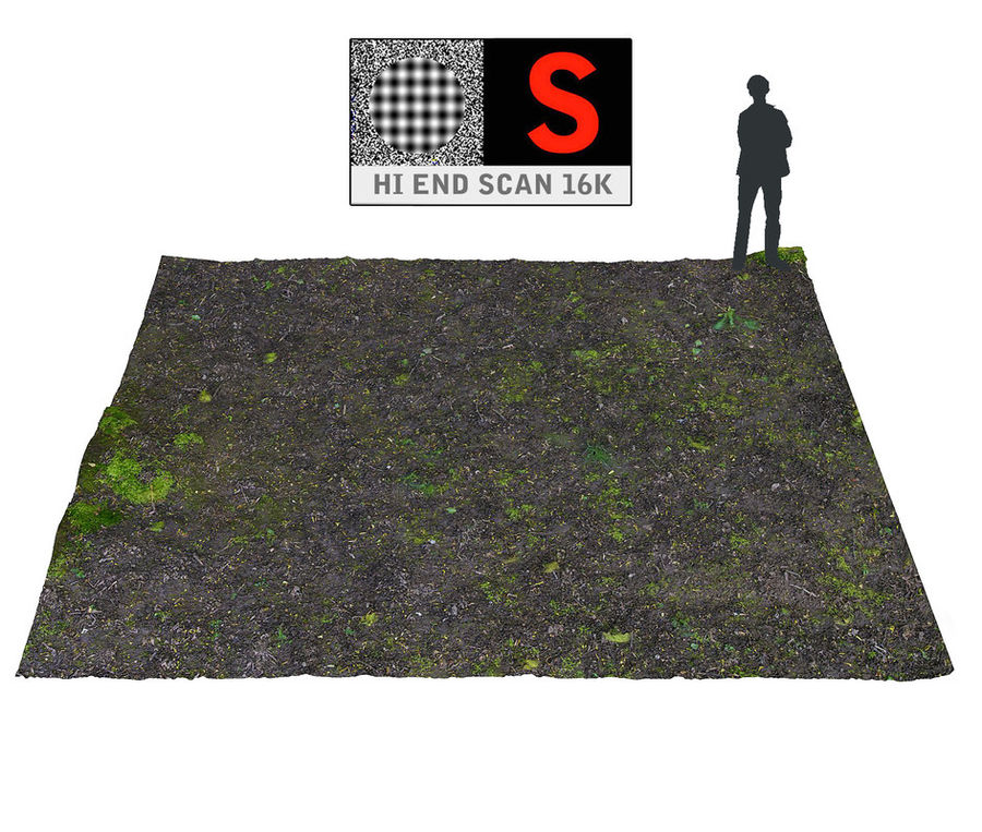 Forest ground 16K Ultra HD royalty-free 3d model - Preview no. 1