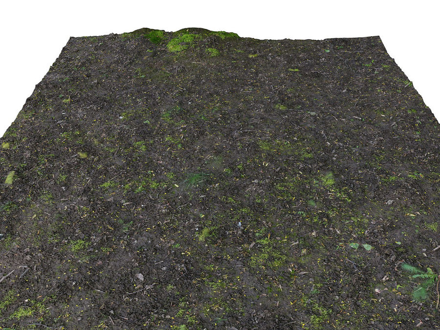 Forest ground 16K Ultra HD royalty-free 3d model - Preview no. 3